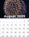 bzmg-08-august-2009