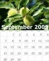 bzmg-09-september-2009
